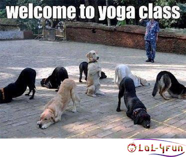 Funny yoga dogs