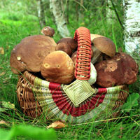 корзинка с грибами - еда от природы