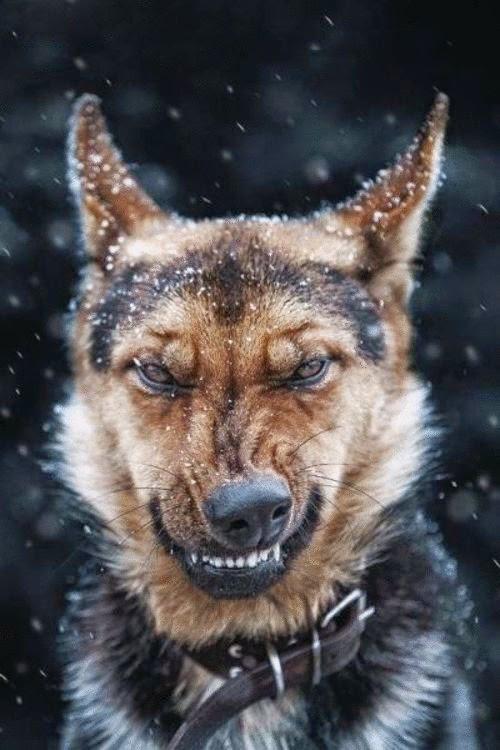 He Hates Snow