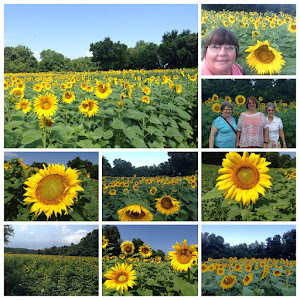 The TWRA sunflower fields