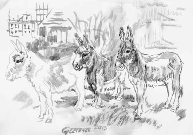 esel, gezeichnet, pinsel, zeichnung, tusche, laviert, malerei, tiere, weide, bauernhof, reiten, pferd, hengst, stute, fohlen