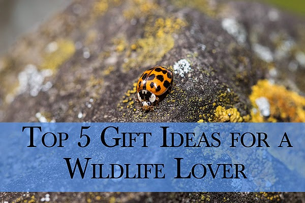 Top 5 Gift Ideas for a Wildlife Lover