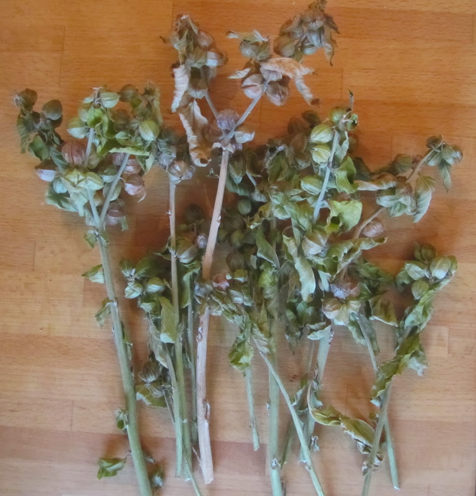 Ashwagandha fruit stems