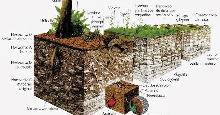 biolog a del suelo biolog a del suelo
