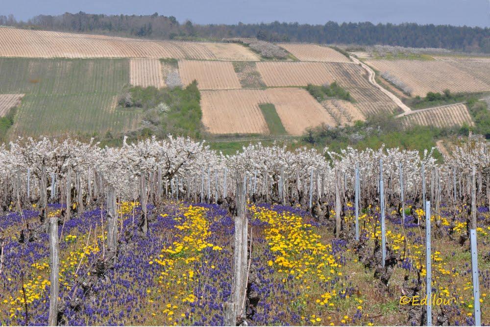 "la Vigne à l'âne (lieu-dit), ""The Donkey's vineyard"", ""Виноградник осла""."