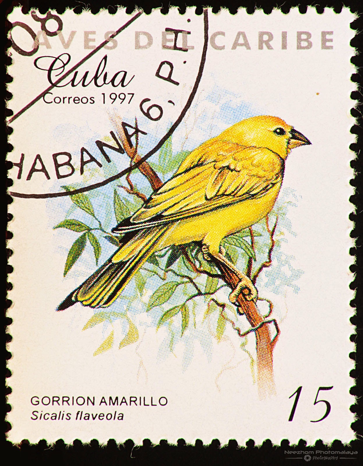 Cuba 1997 Birds of the Caribbean stamp - Saffron Finch (Sicalis flaveola) 15 c