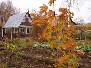 посадки осенью
