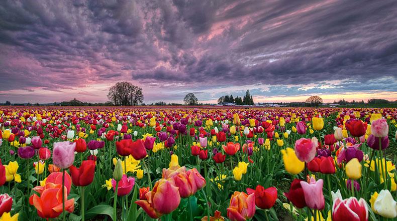 15 Campos de flores de primavera increblemente coloridos alrededor