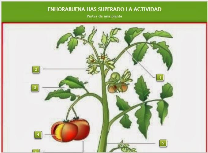 http://www.educaplay.com/es/recursoseducativos/33528/partes_de_una_planta.htm
