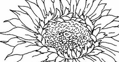 Mewarnai Gambar Bunga Matahari - Aneka Gambar Gambar