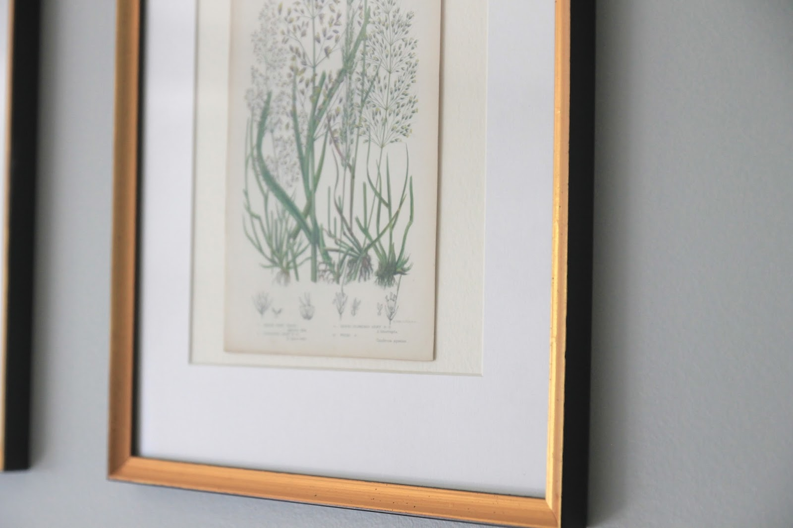 Jenny steffens hobick framing botanicals antique mirror find im so pleased with how they turned out especially because they are one of the first things i see at the top of the stairs and i see them on my jeuxipadfo Images