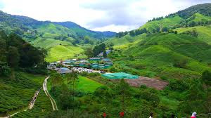 BOH Tea Plantation Cameron Highlands - www.coachnvanrental.com.my