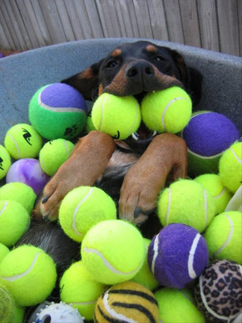 funny dog pictures, dog with balls, this must be heaven, funny animal picture