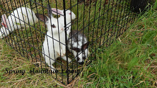 rabbits MIRT