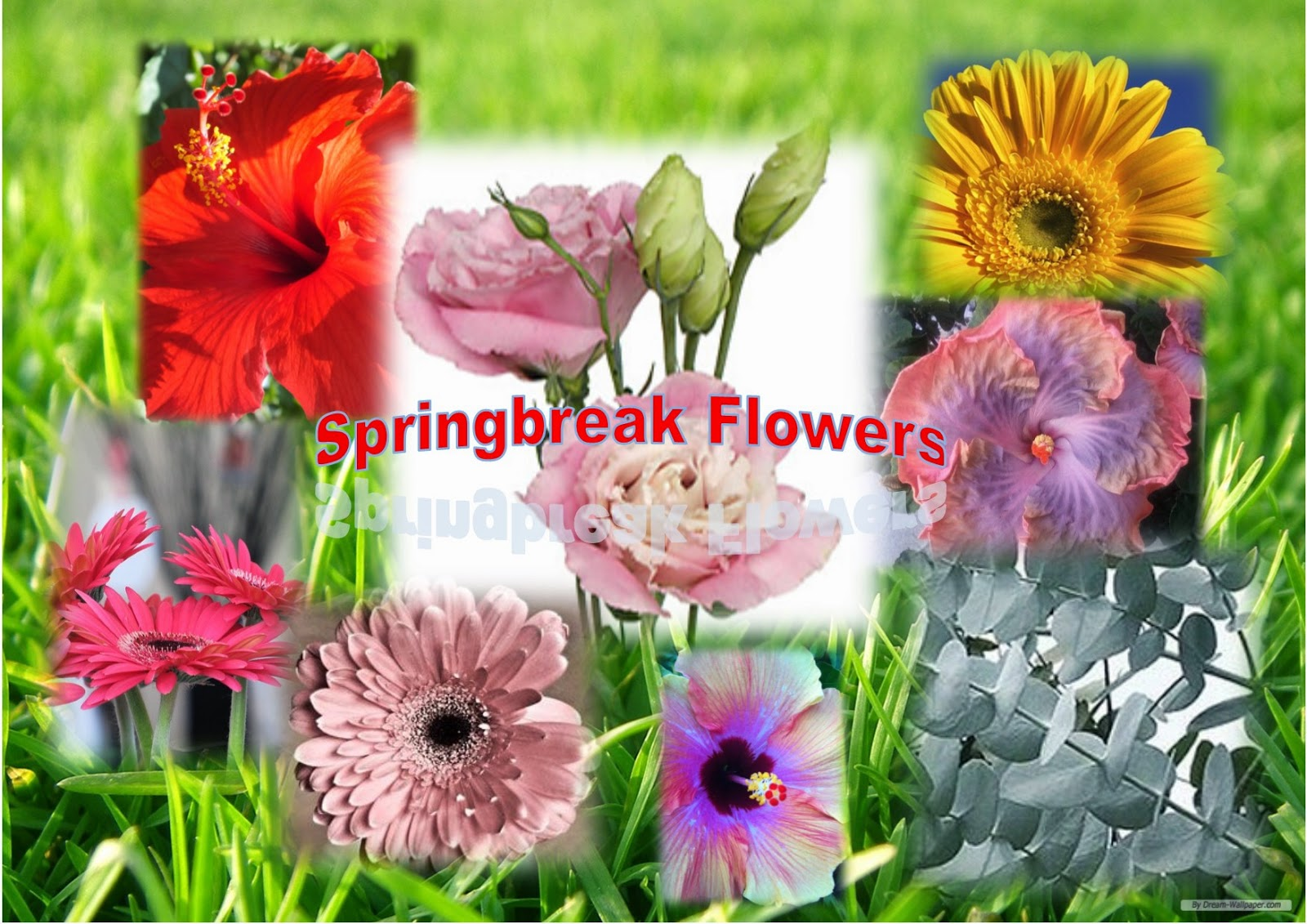 Ecta Creative Solutions Flower Trends For 2015 Spring Break