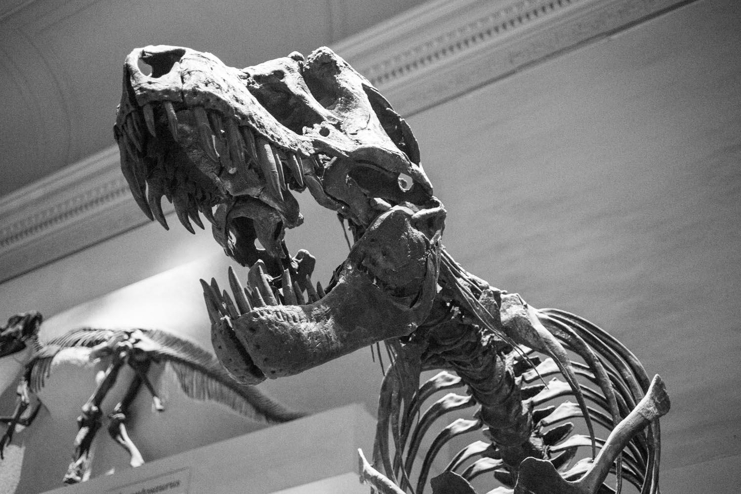 Washington National History Museum TREX