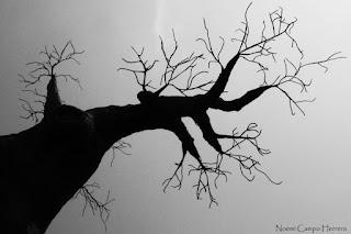 Arbol gris representando la tristeza