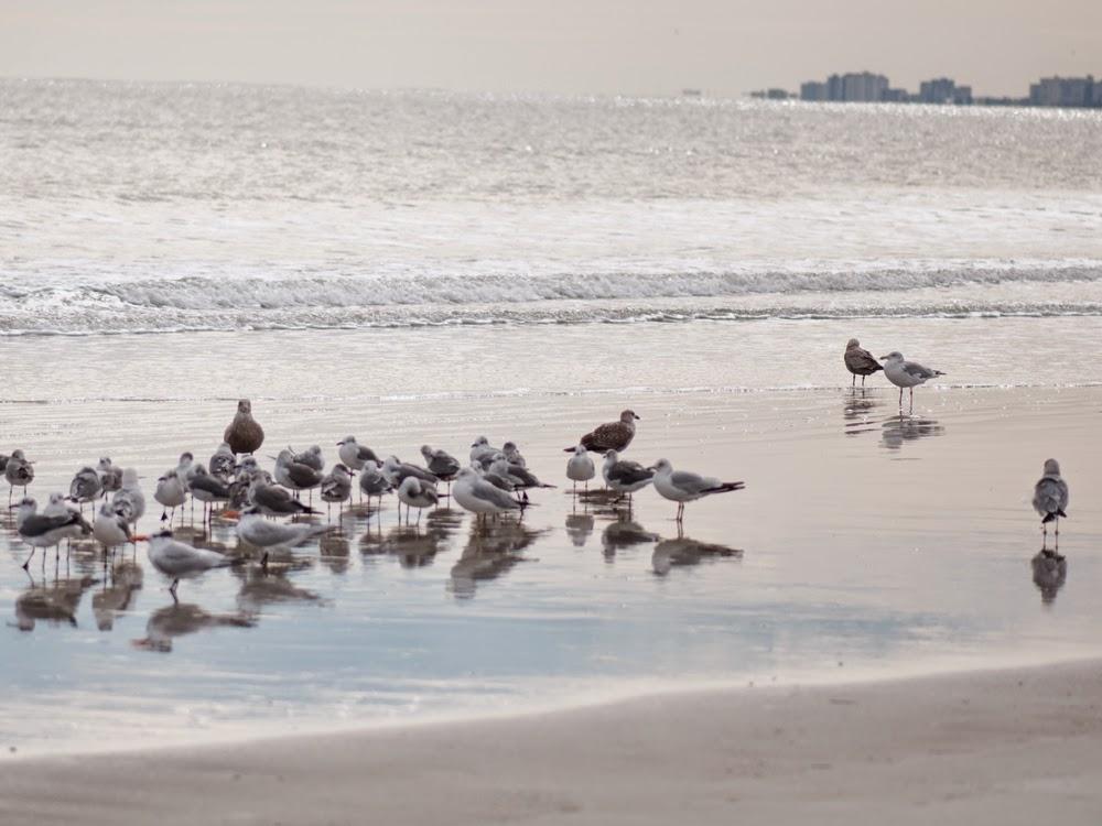 mayport beach jacksonville florida