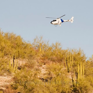 Border Patrol helicopter buzzing innocent cacti in Organ Pipe Cactus Nat. Monument (c) John Ashley