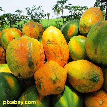 buah pepaya dan manfaatnya untuk kesehatan tubuh manusia