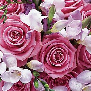 Beautiful Flowers Wallpaper Image For Desktop Pink Rose