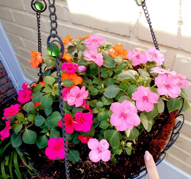 Flores Alegrías del Hogar