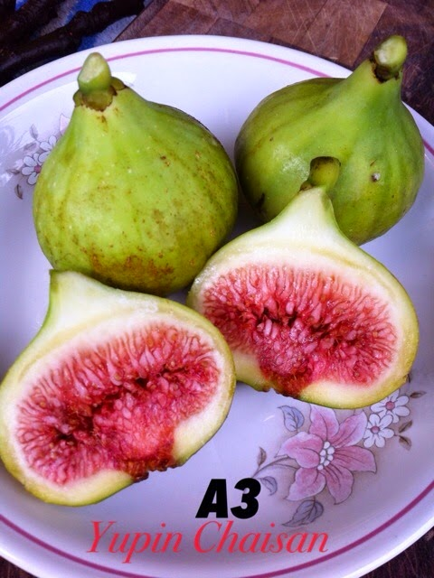 what a figs good for