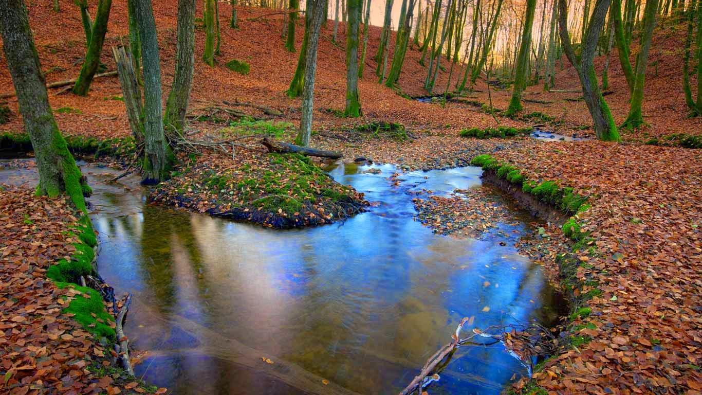 Autumnal forest, Sweden (© Hans Wretling/Corbis) 29