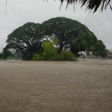 Torrential Downpour, Islitas, Panama