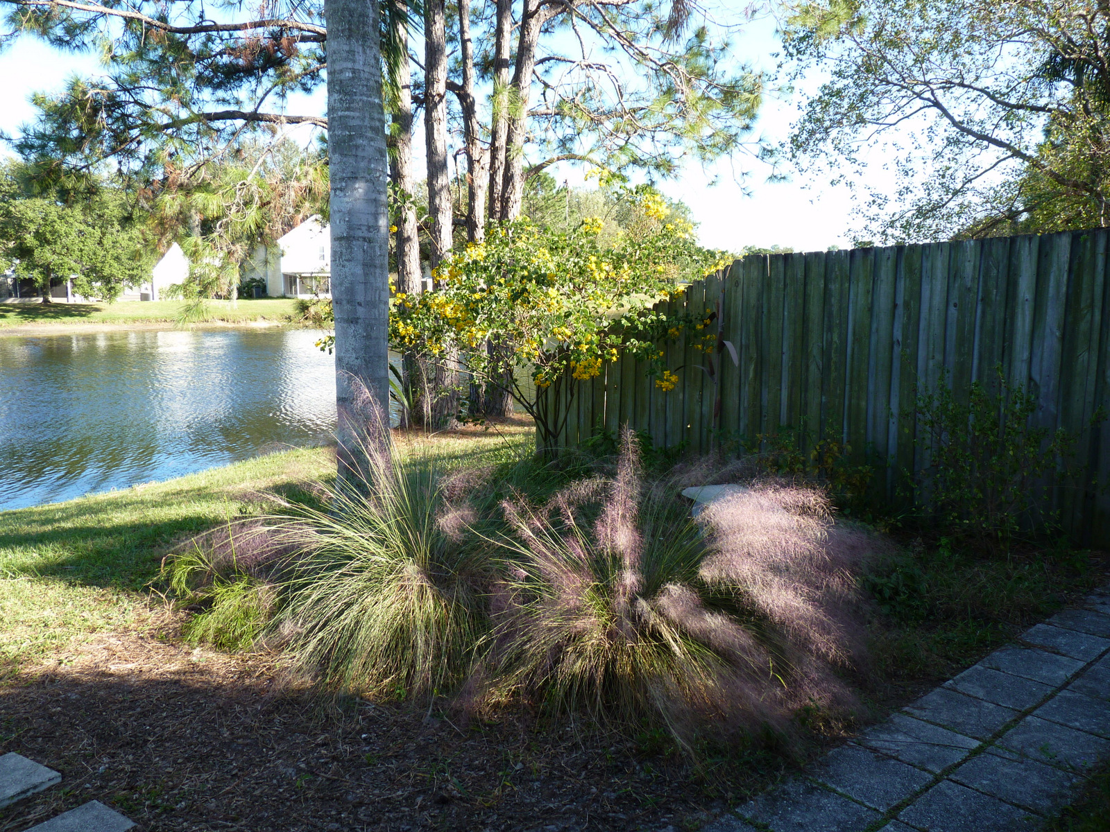 my florida backyard october 2012