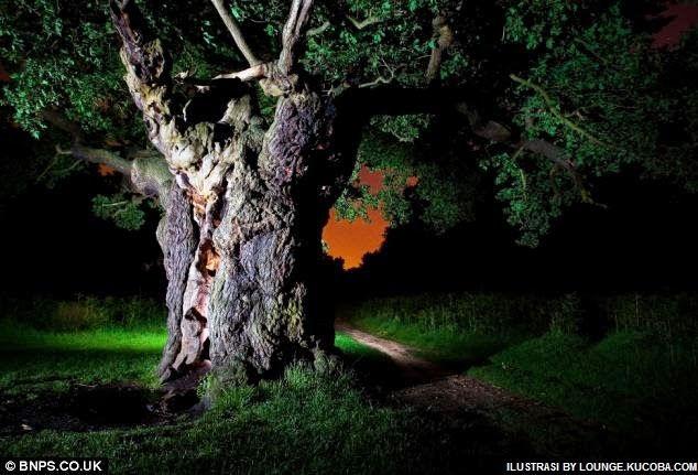 pohon angker