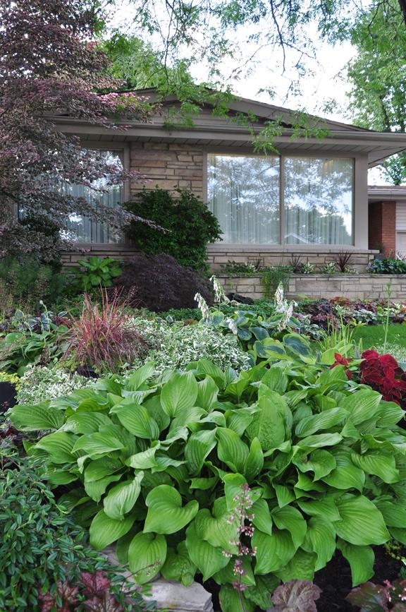 A Garden in the Shade (Part 1)