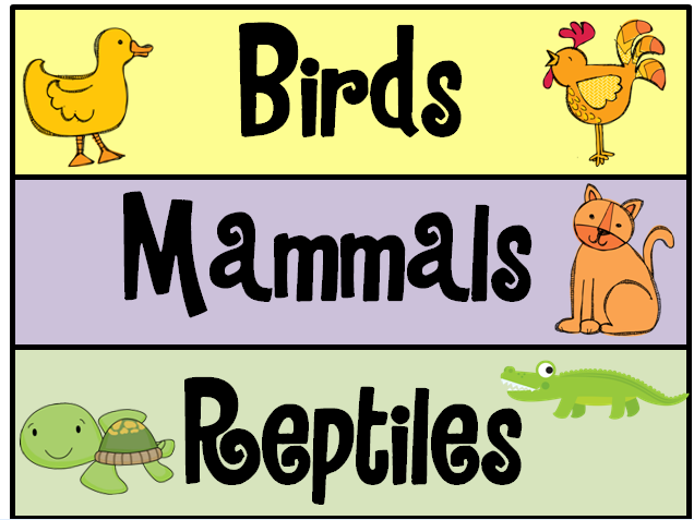 Sample's Superstars: Animal Classifications Unit