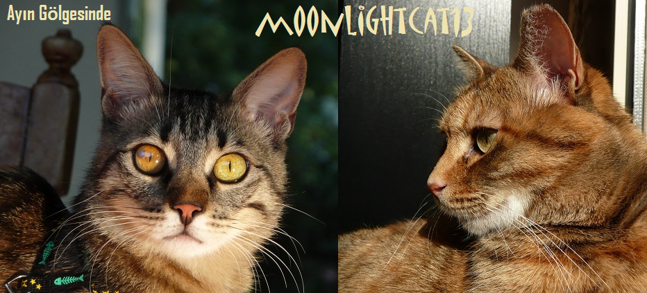 moonlightcat13