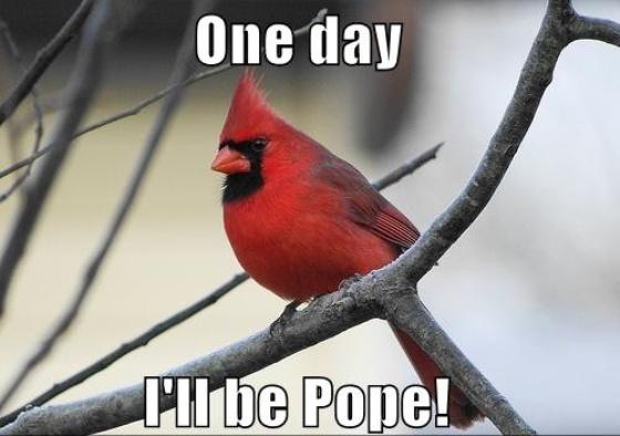 Justacargal papal humor - Funny bird pics ...