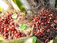 Ini 8 Kekayaan Alam Indonesia Terbesar di Dunia Saat Ini, Selain Hewan