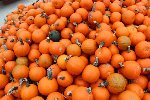 goebbert's pumpkins