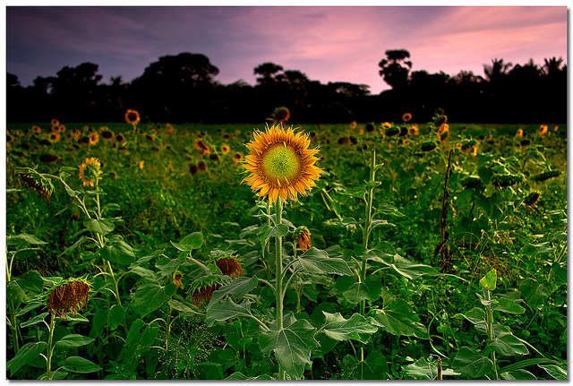Photography by Soumya Bandyopadhyay