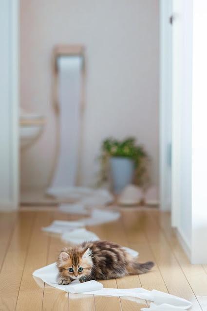 Cat Photography by Ben Torode