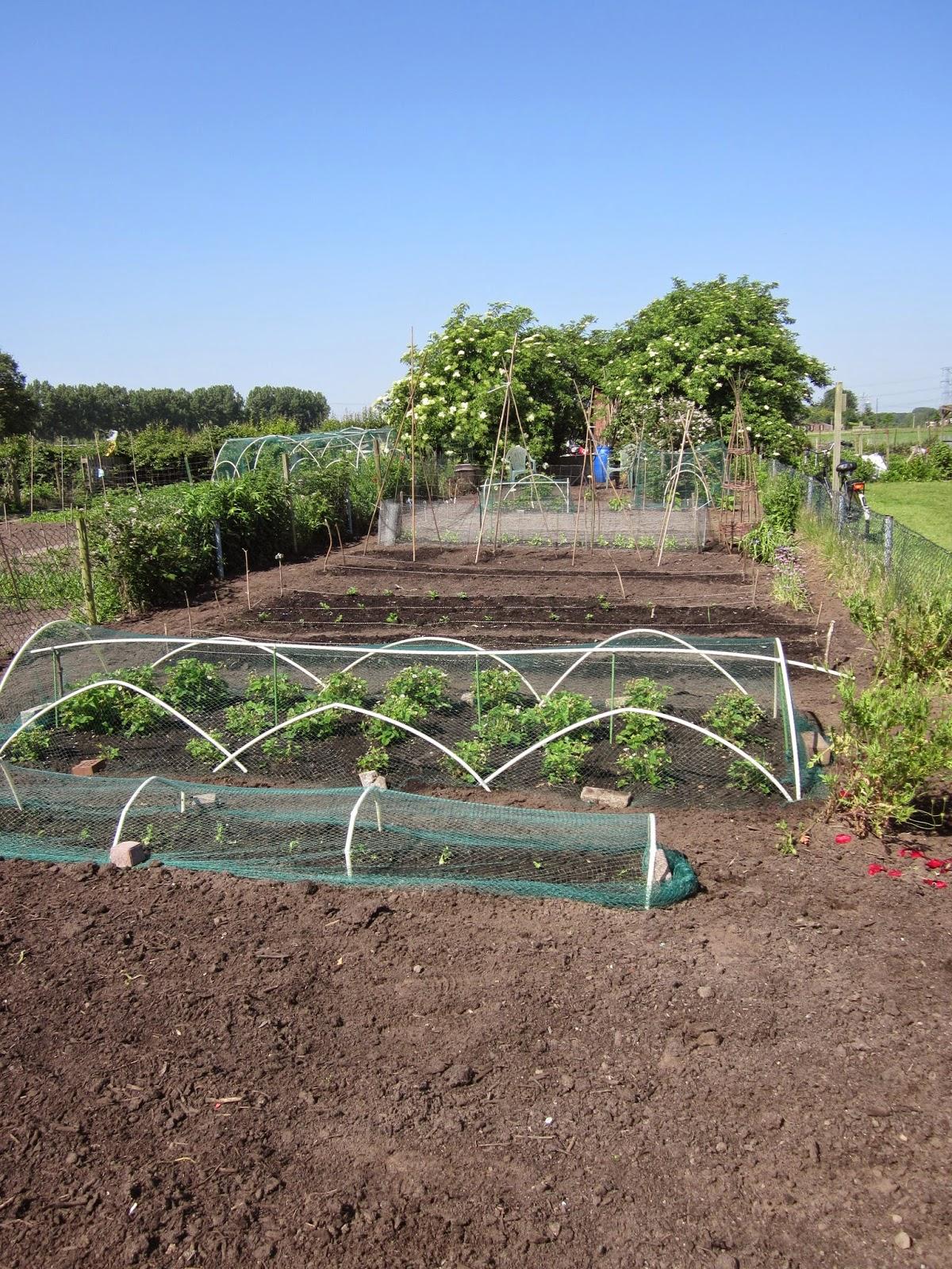 Huis tuin en keuken: m: moestuin, voor en na