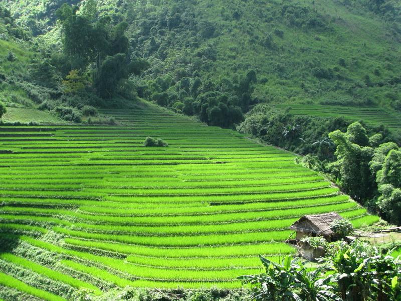 Ruộng bậc thang trên đường đi Đồng Văn