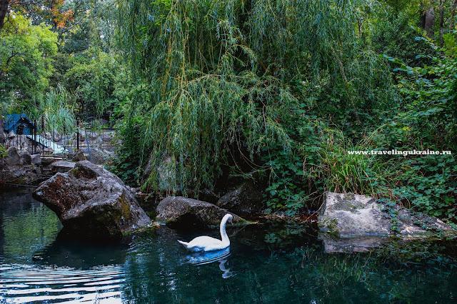 Лебединое озеро, Воронцовский парк