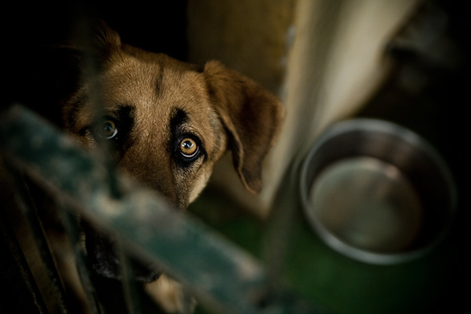 Shelter Dogs - photos by Andreas Holm. The story of dog - Notes from the Pack.