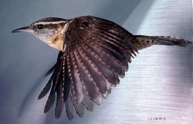 நான் பார்த்து ரசித்த புகைப்படங்கள் சில.... - Page 2 Flying+Birds+%252817%2529