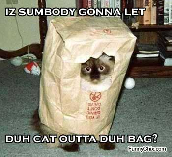 Funny Image Collection: Funny Cat Pictures - Unbound State | Humor ...
