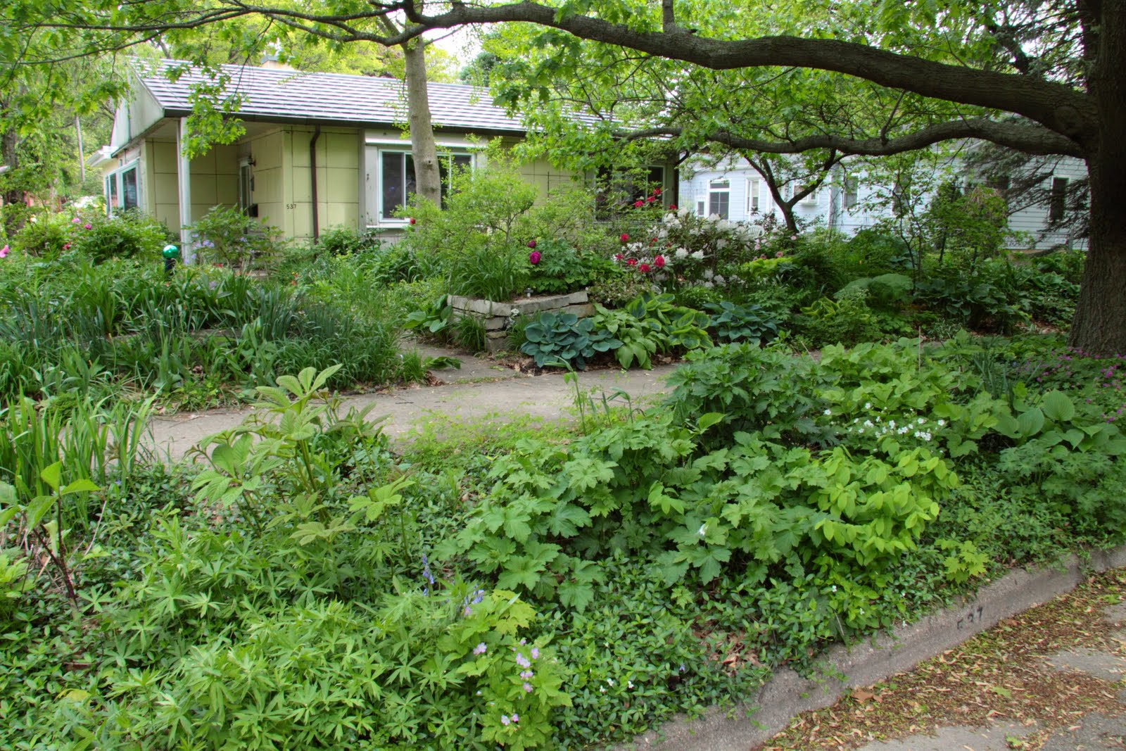 Rain gardens in dane county terrace gardens for Terrace garden