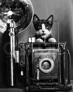 Hola a TODOS! Gato+fotografo