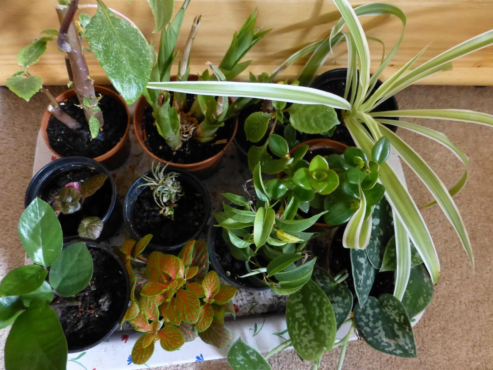 botaniquarium blog terrarium. Black Bedroom Furniture Sets. Home Design Ideas