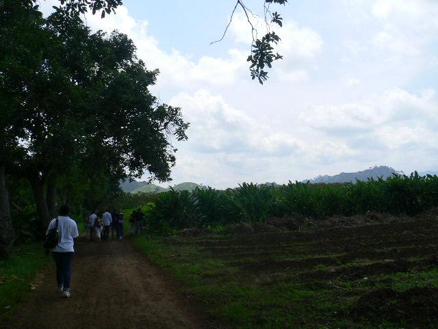 Ngobithe visite la plantation de fleurs caplain penja for Plantation de fleurs
