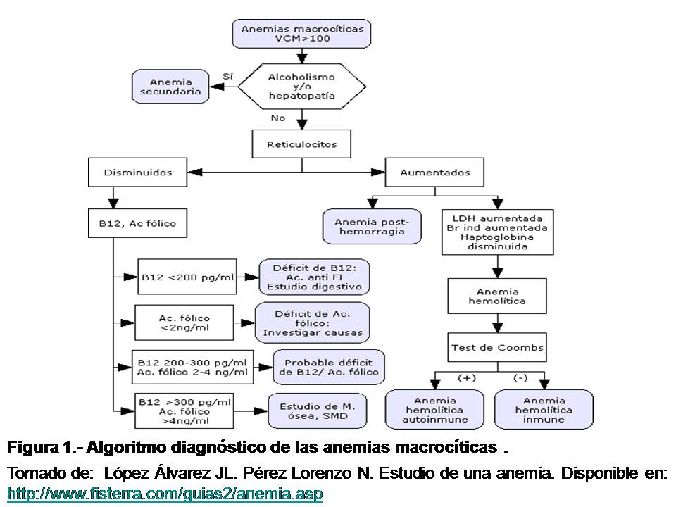 la toma de anovulatorios en la figura 1 se muestra un algoritmo ...